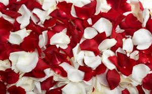 petali-di-rosa_O2
